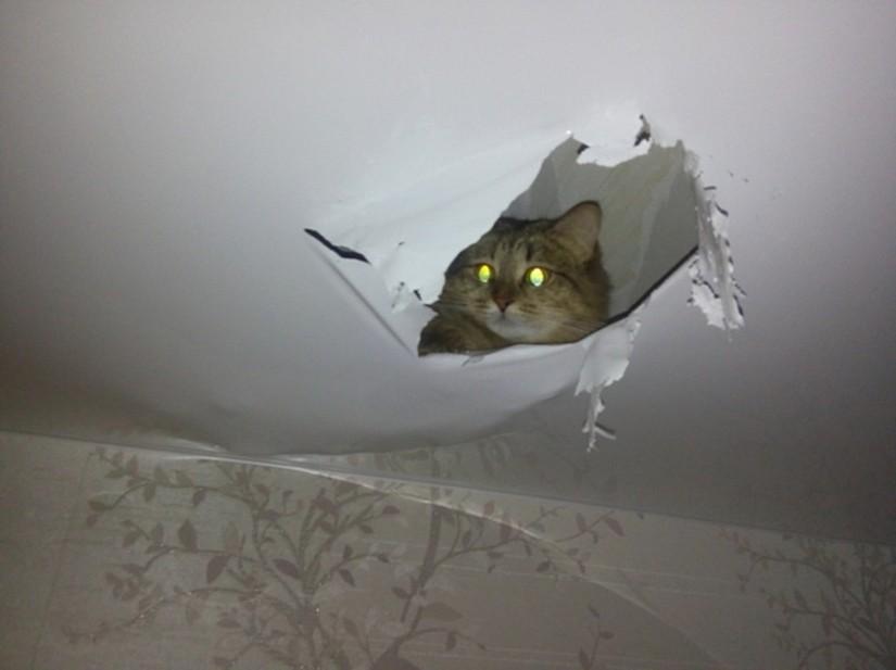 Повреждение натяжного потолка домашними животными
