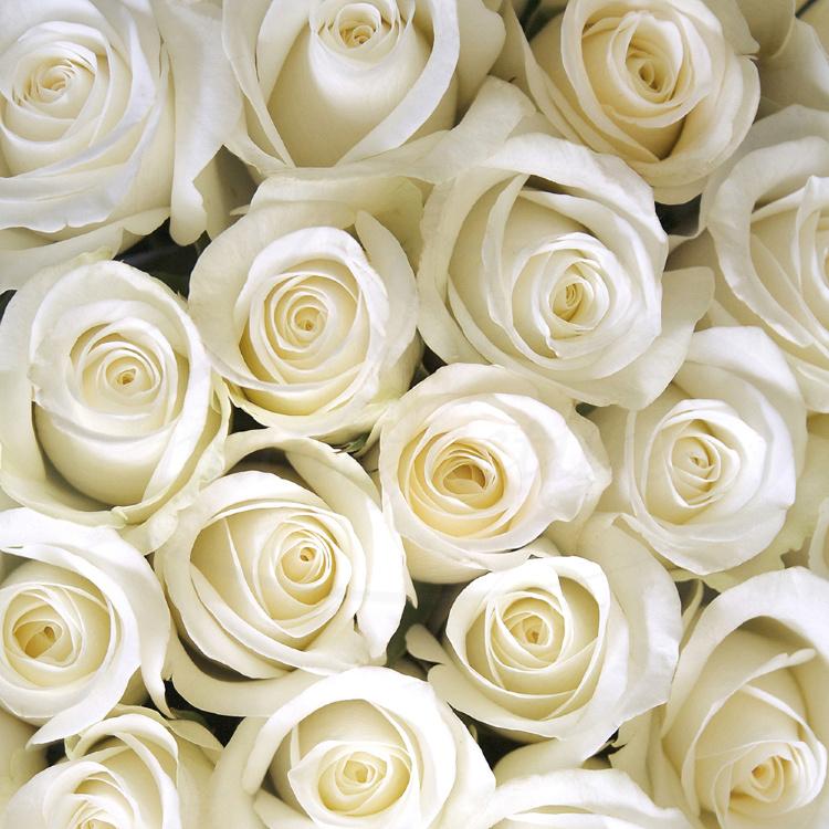 Розы красные фото цветов букет данный